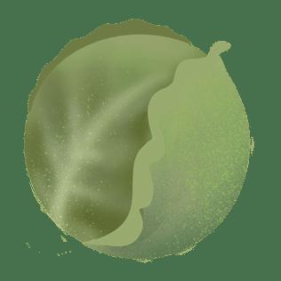 Sommerkål
