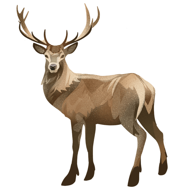 Om hjort