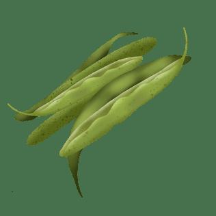 Aspargesbønner