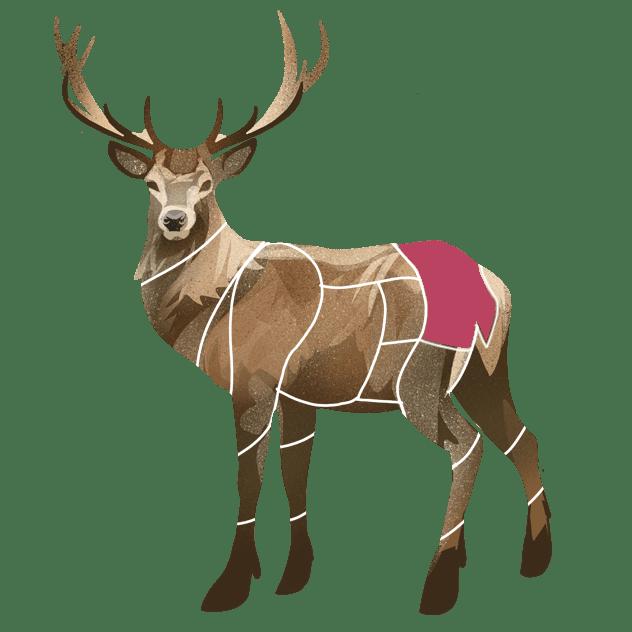 Culotte av hjort