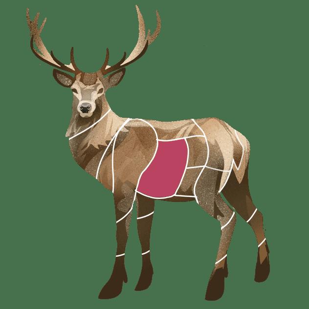 Bibringe av hjort