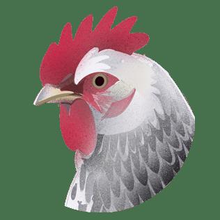 Om høne