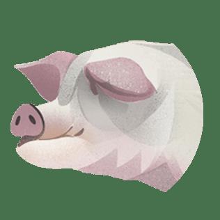 Om svin