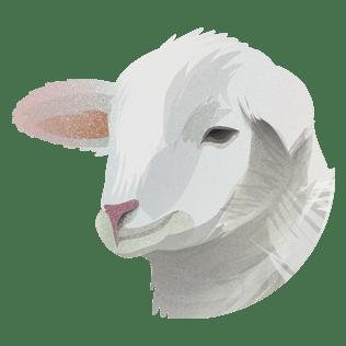 Skank av lam