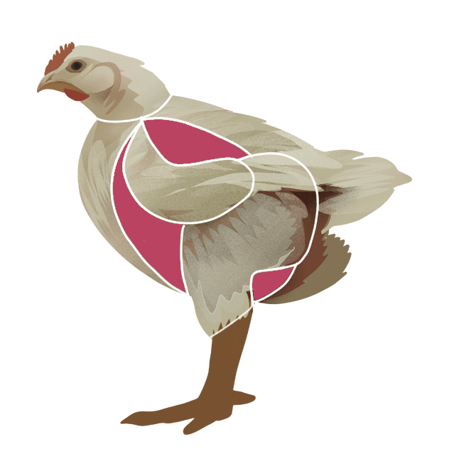 Kyllingfilet