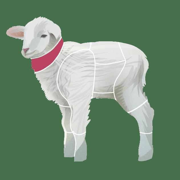 Bryst og nakke av lam
