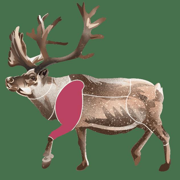 Bog av reinsdyr